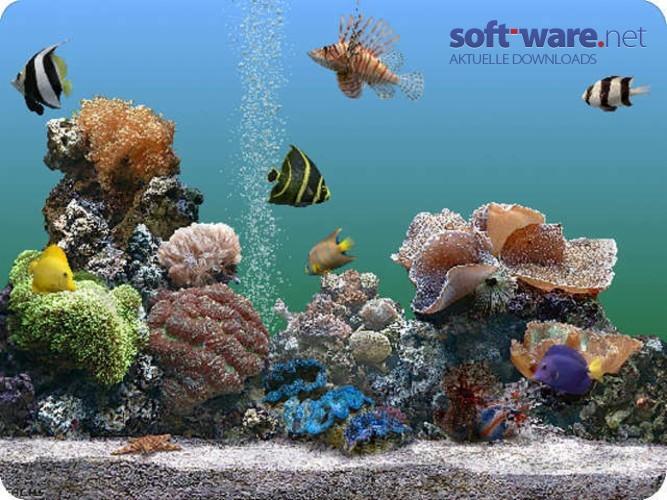 aquarium bildschirmschoner 2 0 deluxe download windows deutsch bei soft ware net. Black Bedroom Furniture Sets. Home Design Ideas
